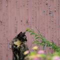 サビ猫とランタナ