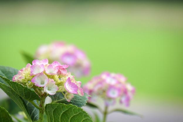 Photos: 咲き揃う