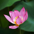 Photos: 繊細な花