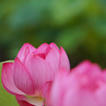 Photos: 花の影