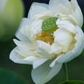 Photos: 傾く花