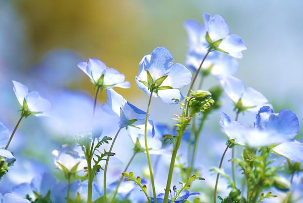 群れ咲く空