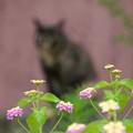 Photos: 猫の気配