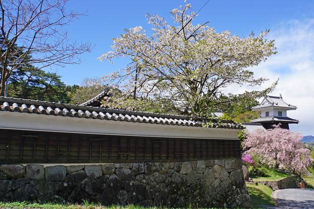 Photos: 桜と櫓