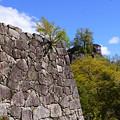 Photos: 石垣