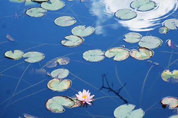 浮遊する花