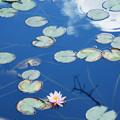 Photos: 浮遊する花