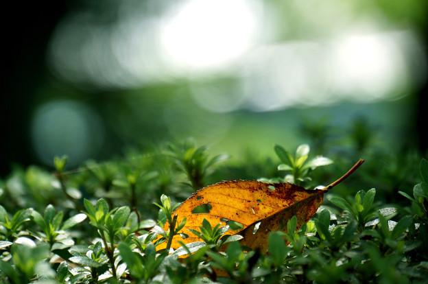 秋色ひとひら