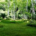 Photos: 苔絨毯