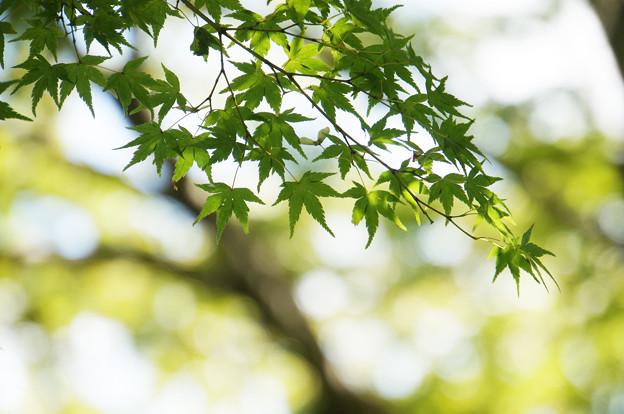 光と風と緑