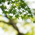 Photos: 光と風と緑