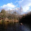 写真: 冬の凍てつく池
