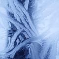 写真: 霜の華(原型)