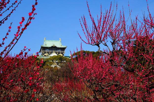 梅雲上の大阪城