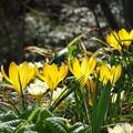 春光る♪♪