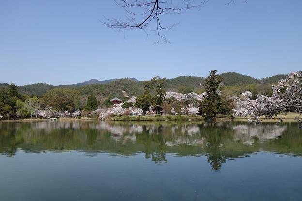 大沢池と多宝塔