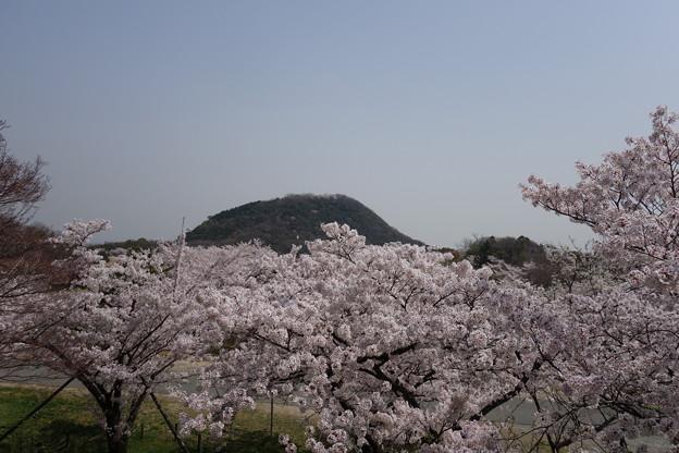桜雲から顔を出す甲山