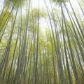 写真: 洛西青もみじ浴 竹林の道