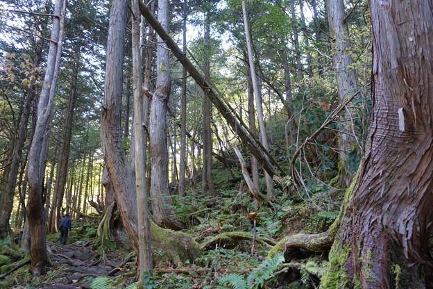 蓼科大滝への道