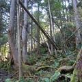 写真: 蓼科大滝への道