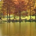 写真: 大池