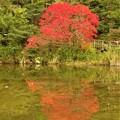 ハゼノキ紅葉