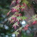 写真: 廣田神社 紅葉のはしり