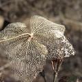 紫陽花切り絵