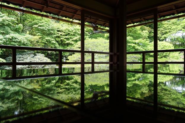 Photos: 青もみじ♪♪