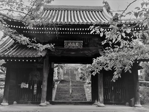 神呪寺山門