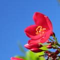 赤い桜♪♪