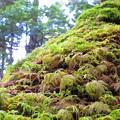 Photos: 苔の森