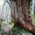 Photos: 蓼科大滝への道