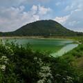 Photos: 仙人草と俺の甲山