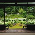Photos: 半夏生の庭