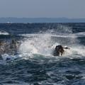 写真: 城ヶ島 海その781 IMG_1173