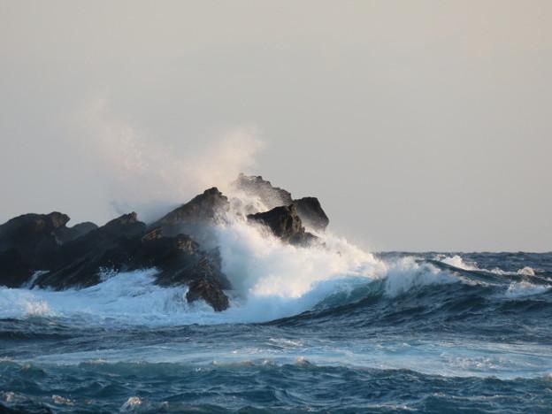 Photos: 城ヶ島 海その794 IMG_1396
