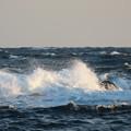写真: 城ヶ島 海その804 IMG_1386