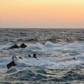 写真: 城ヶ島 海その813 IMG_1428