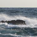 Photos: 城ヶ島 海その815 IMG_1163