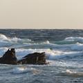 Photos: 城ヶ島 海その819 IMG_1340
