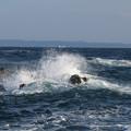 Photos: 城ヶ島 海その823 IMG_1195