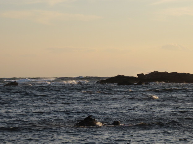 Photos: 城ヶ島 海その831 IMG_1351