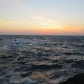 Photos: 城ヶ島 海その834 IMG_1457