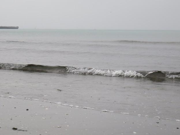 検見川浜 IMG_2931 海その843