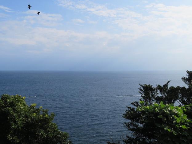 江の島 海その868 IMG_3428