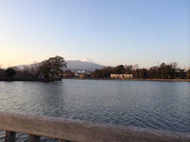 門池から富士が見える