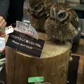Photos: 富士花鳥園のフクロウ
