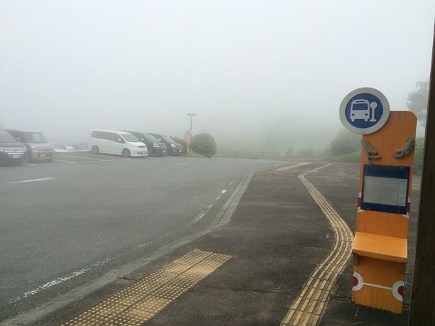 Photos: 霧のバス停