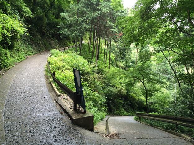 高尾山 参道3
